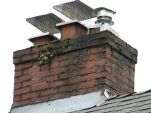 Protecting your chimney from animal intrusion - Los Angeles CA - The Chimney Sweeper